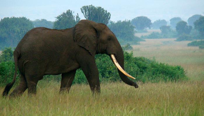 Herbivores Wild Animal Best Blog Uganda Wild Animals