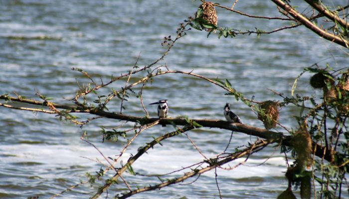 Rwanda birds