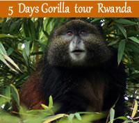 5 days gorilla tour Rwanda