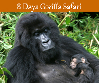 8 days gorilla safari