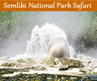3 Day Semliki National Park Safari