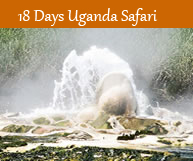 Tour Uganda In 10 Days