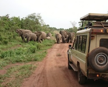 a game drive at akagera-national-park