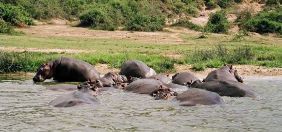 4 Days Queen Elizabeth Park Safari in Uganda ,wildlife tour uganda safari, Uganda Tour