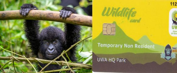 Mountain Gorilla Trekking Permit Frequently asked Questions – Uganda Safari News