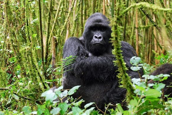 5 Days Uganda Gorilla safari Bwindi Impenetrable, Uganda Wildlife Tour Queen Elizabeth Park