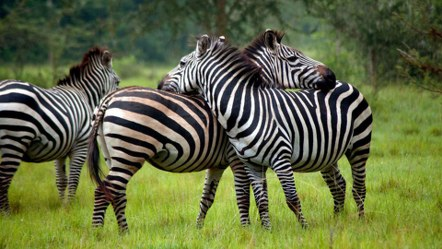 5 Days Uganda Wildlife Safari to Queen Elizabeth Park, Lake Mburo National Park Safari Uganda