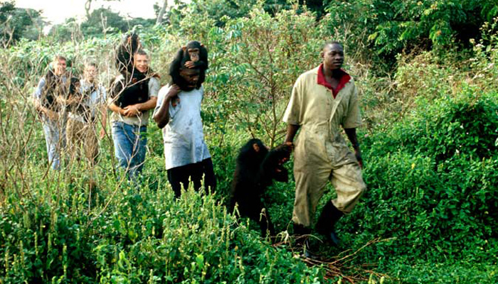 One 1 Day Ngamba Island Chimpanzee Tour