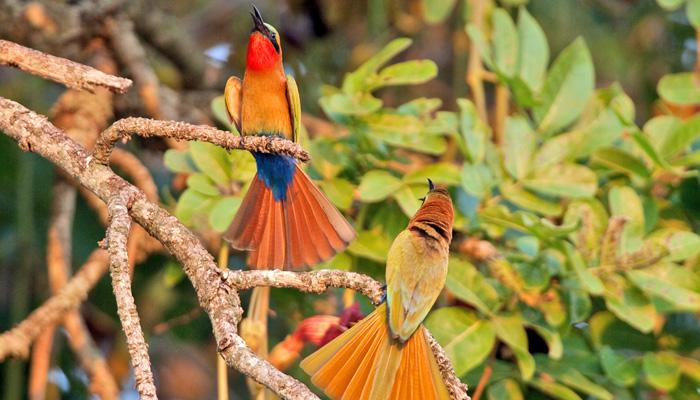 Uganda birding
