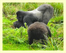 10 Days Uganda Gorilla Safari Tour
