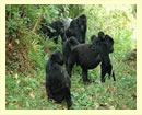 12 Days Uganda Wildlife and cultural safari
