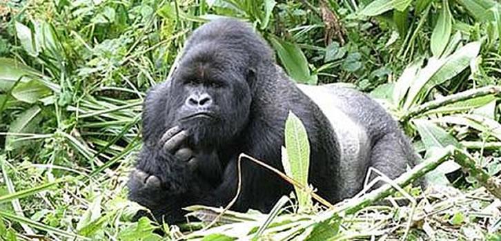 Gorilla Safaris - Uganda & Rwanda