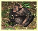 uganda-gorillas-&-chimpanzee-trek