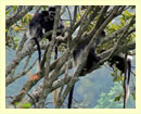Uganda Primates Tour for 12 Days