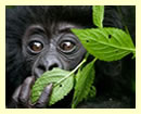 1 Day Rwanda Gorilla Excursion