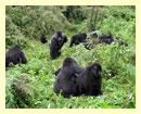 rwanda-gorilla-safari