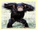 Rwanda Gorilla Safari & Chimps Trek