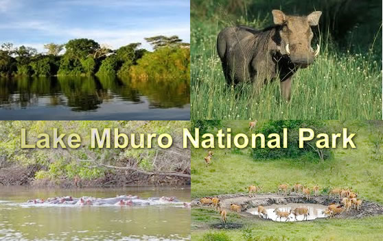 mburo-national-park