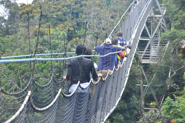 nyungwe-national-park