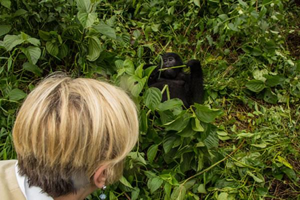 How do Gorillas Sleep? Do Gorillas Sleep in Nests?