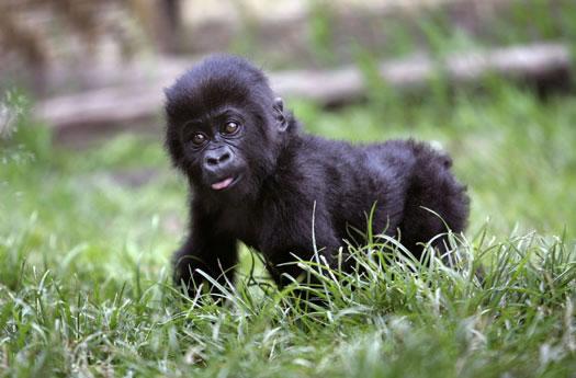2 Days Rwanda Gorilla Adventure