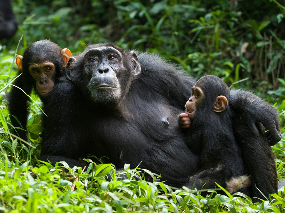 5 Days Uganda gorilla and wildlife safari