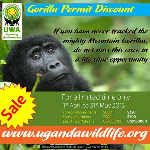 discounted gorilla permits -uganda
