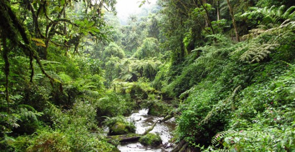 nyungwe-forest - national -park