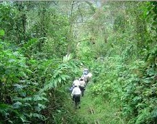 nature -walks in bwindi