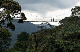 nyungwe forest-national park