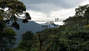 canopy walk in nyungwe forest-national park