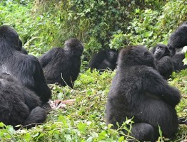 gorilla safaris and tours ltd