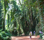 botanical-gardens-entebbe