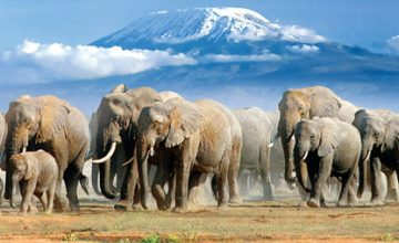 5 Days Kenya Wildlife Safari to Amboseli and Tsavo National Parks
