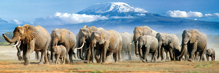 amboseli-national-park-kenya-safaris