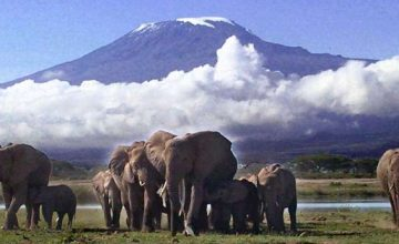 8 Days Chimpanzee & Wildlife Safari in Kenya