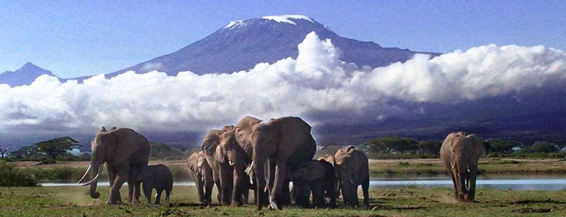 Amboseli National Park safaris