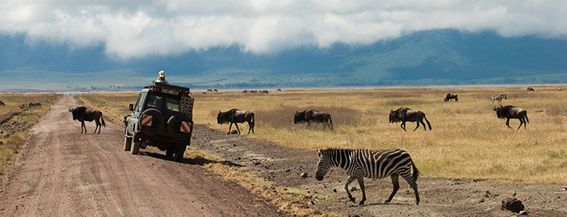 morning-game-drive-in-ngorongoro-crater-tanzania-safaris