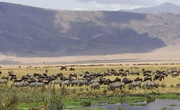 2 Days Tanzania Safari to Ngorongoro National Park