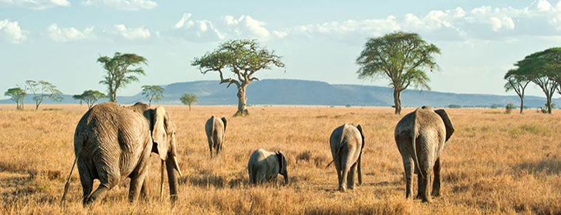 serengeti-national-park-tanzania-safaris