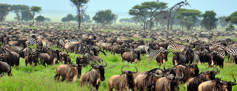 serengeti-national-park-the-great-migraion