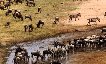 2 Days Tanzania Safari to Tarangire National Park