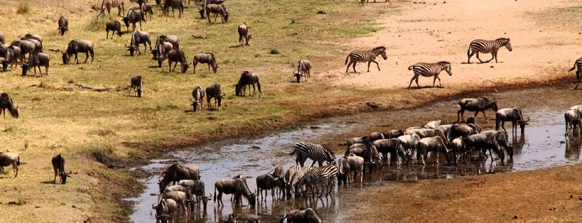 tarangire-national-park-tanzania-safaris
