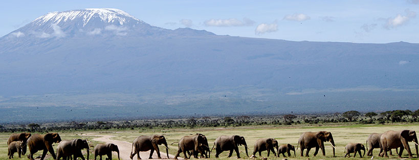tour-amboseli-national-park-kenya-safaris