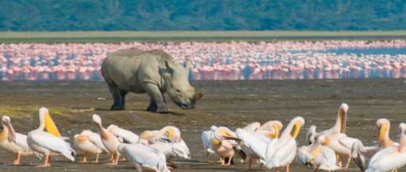 bird-watching-safaris-in-lake-nakuru-np