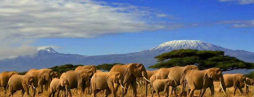 game-drive-amboseli-national-park