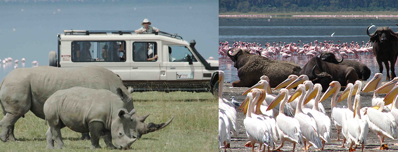 lake-nakuru-wildlife-kenya-safaris