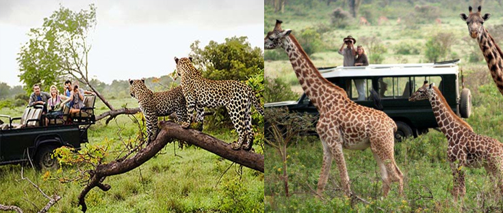 13 Days Kenya, Tanzania and Uganda Primate & Wildlife Flying Safari tour