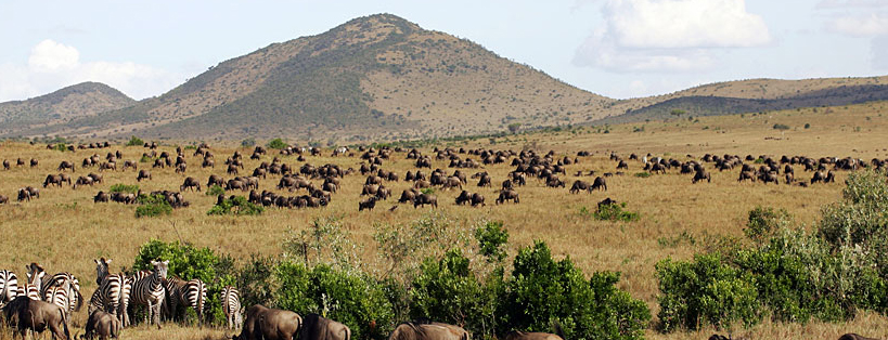 masai mara-game-drives-kenya safaris
