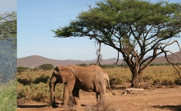 5 Days Wildlife Safari in Kenya